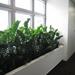 Rośliny przeznaczone do wnętrz